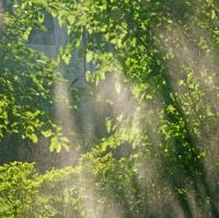 Blogging-tree-sunshine-rain