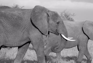 Elephant-Amandad-pixabay-402517_640